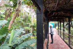 Botanischer-Garten-III