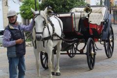 Pferdekutsche-II