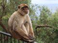 Der Affenfels